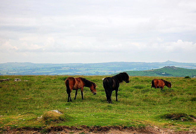 Dartmoor National Park (8)